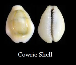 cowrie-4