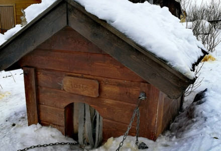 Dog House Property Tax